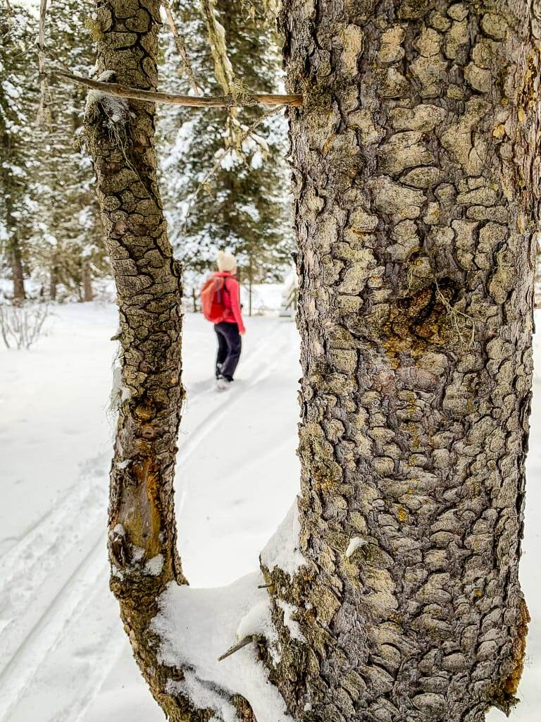 A tree branch frames a woman snowshoeing in Banff National Park