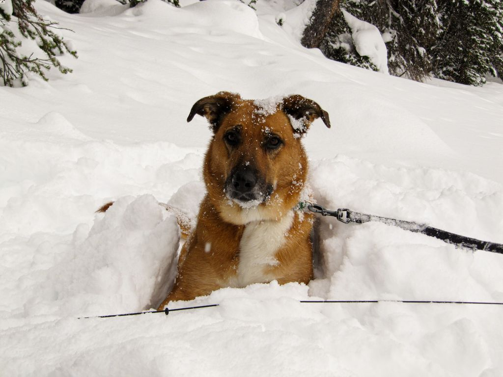 When snowshoeing in Banff and Kananaskis dogs are allowed on-leash