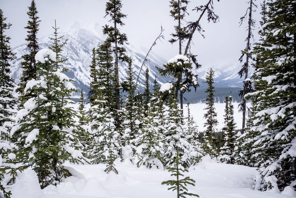 You can see the Spray Lakes and surrounding mountains from the Shark Lake snowshoe trail in Kananaskis Country