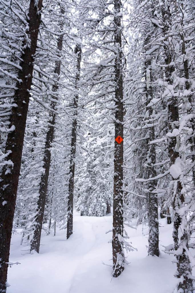 An orange diamond snowshoe trail sign pops in the Kananaskis winter scenery
