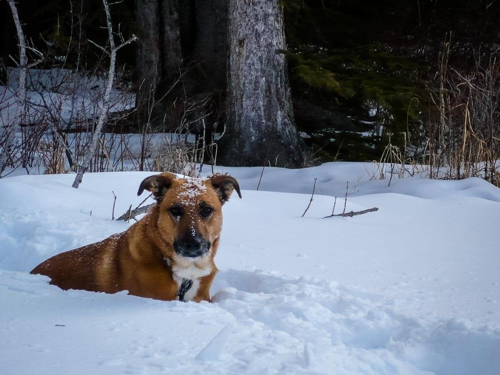 Banff snowshoe trails with dogs