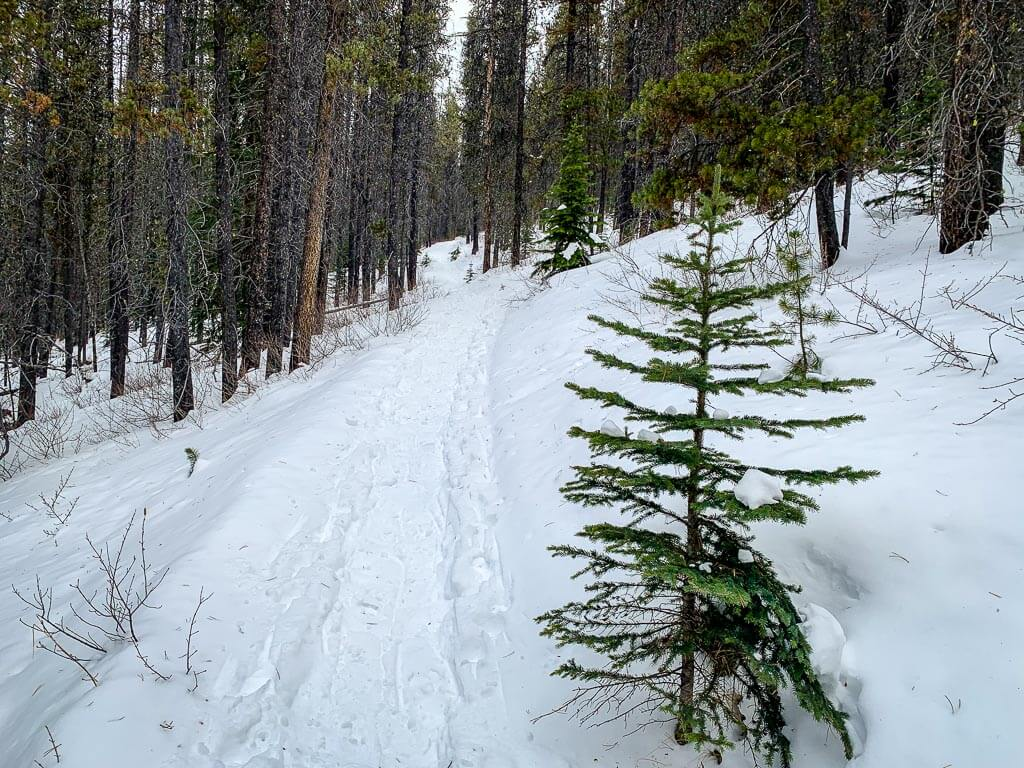 Norquay snowshoeing trails - Cascade Amphitheatre trail