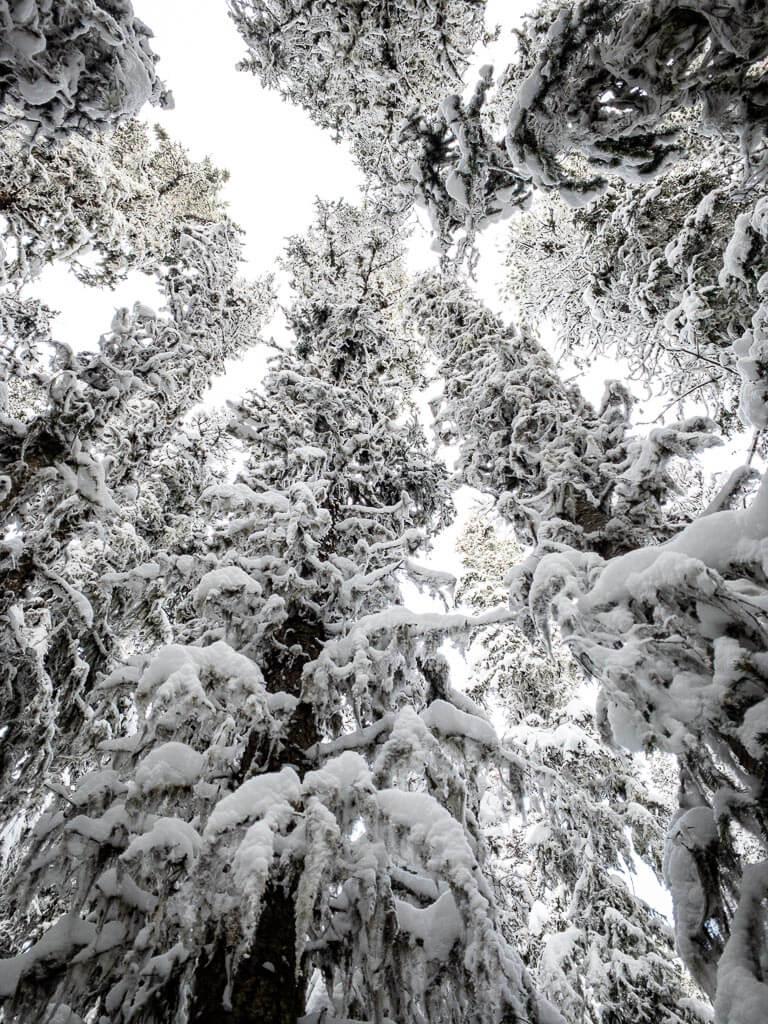 banff snowshoe trail conditions