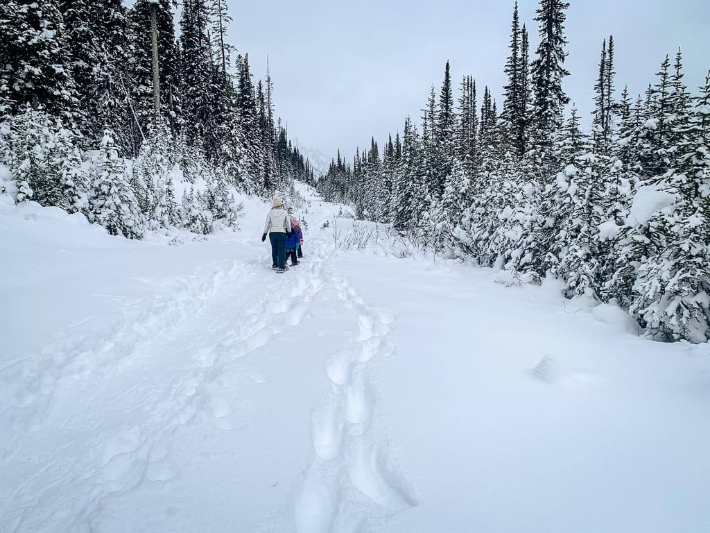 The wide trail on the Shark Lake Trail provides great views of Kananaskis Country