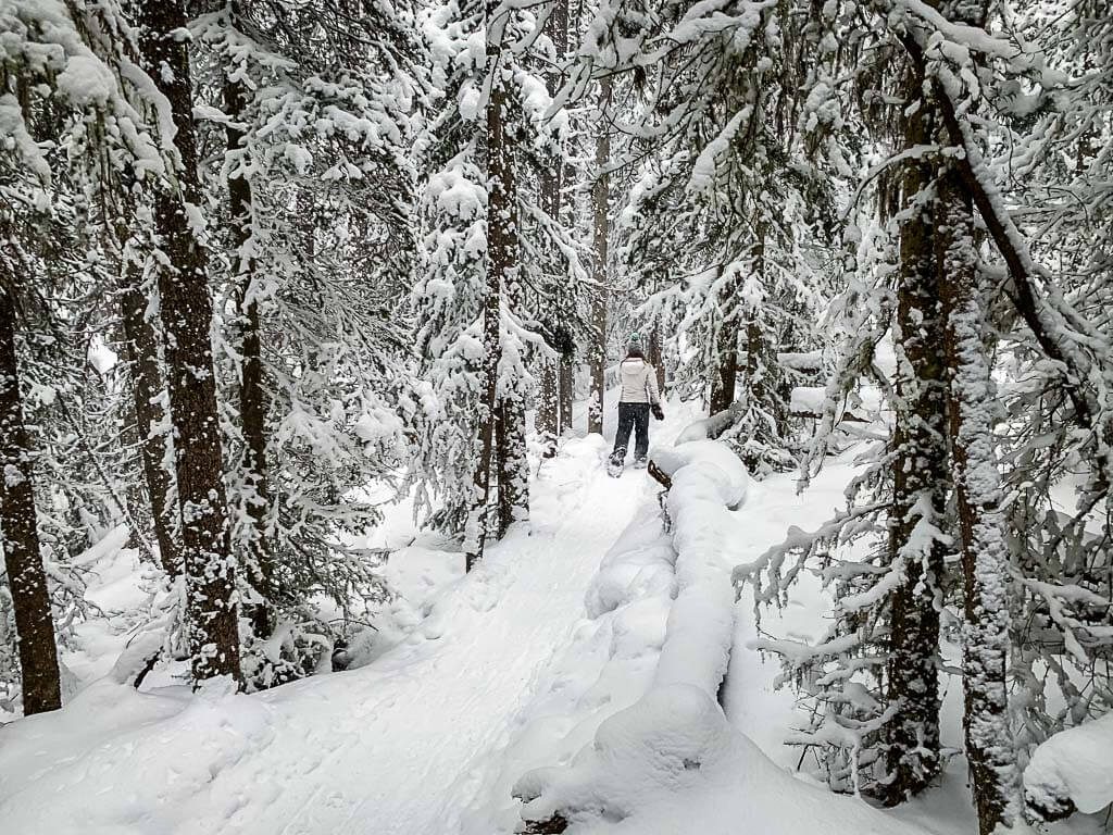Easy Banff Snowshoe Trail - Upper Stoney Loop