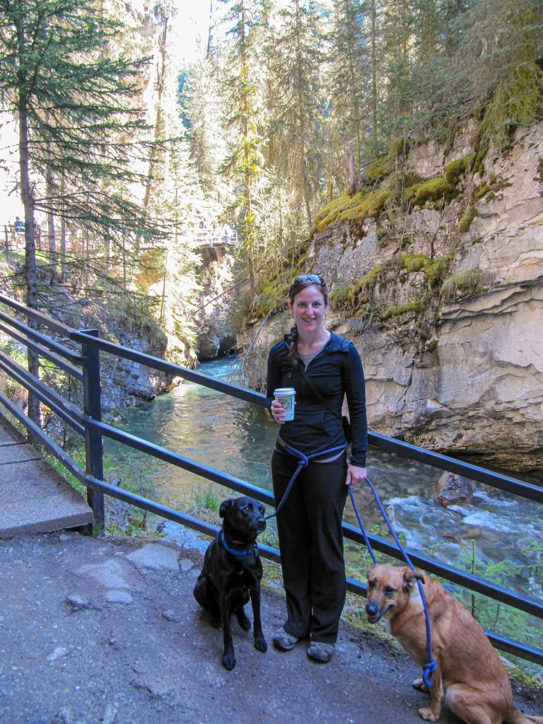 Dogs hiking in Banff must be on-leash
