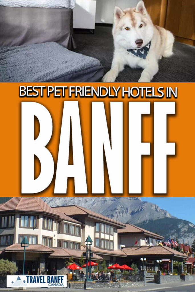 Wondering where to stay in Banff with a pet? These are the best pet friendly hotels in Banff.