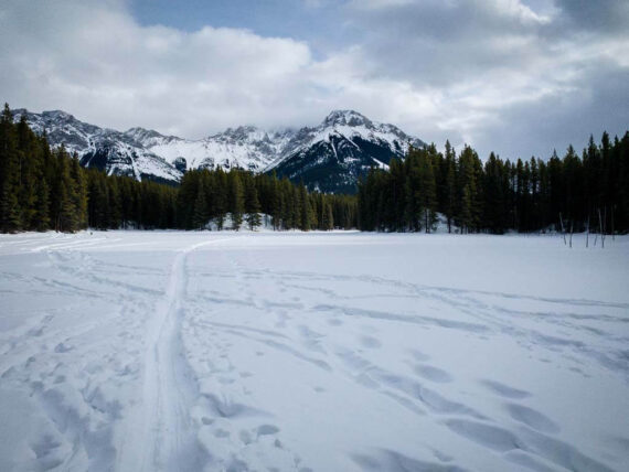 Frozen Toad Snowshoe Trail in Kananaskis Country
