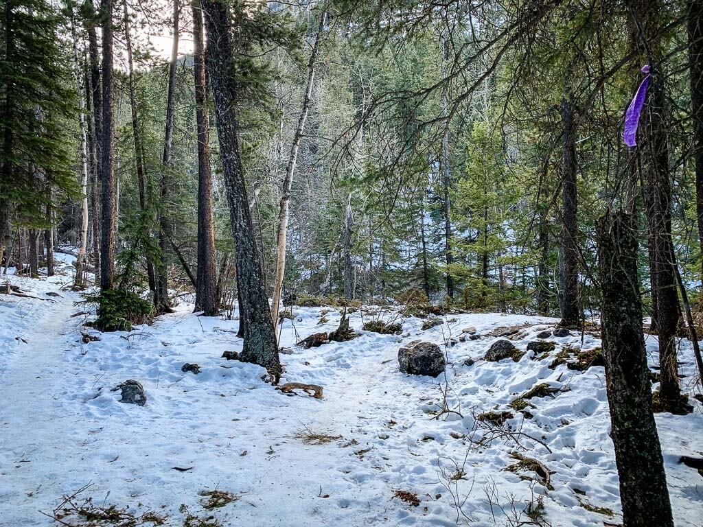 On the McGillivray Canyon winter hike, the junction for the bypass trail and the canyon trail is at the purple ribbon