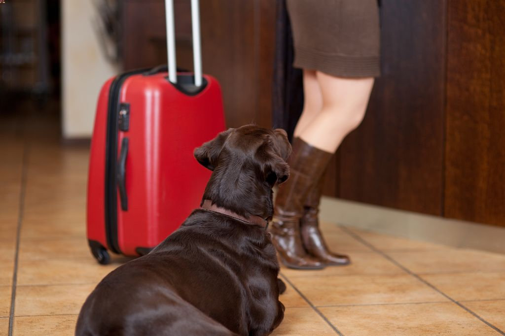 banff hotels that allow dogs
