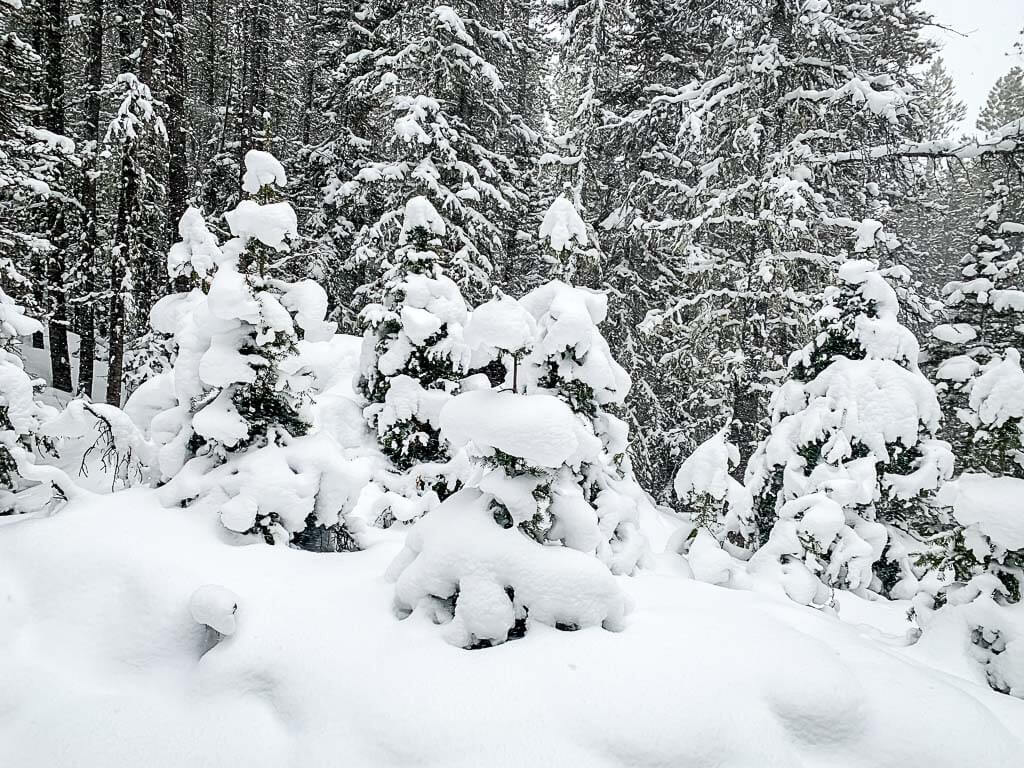 snow covered trees in Banff on Upper Stoney Loop