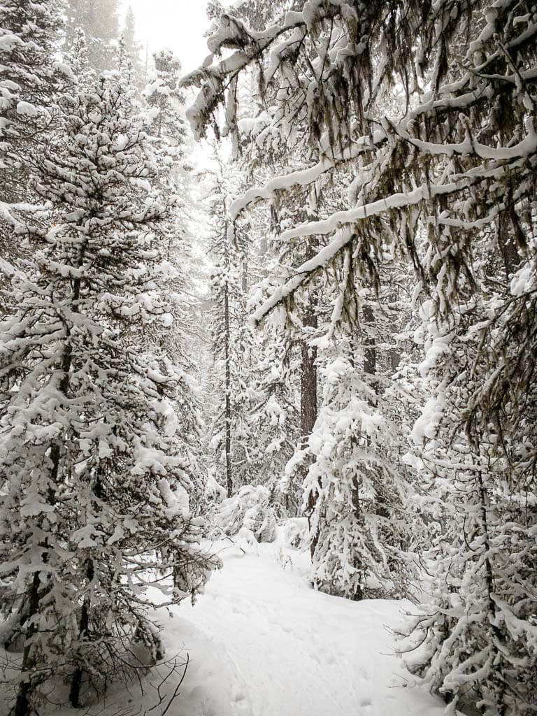snow covered trees along Upper Stoney Lookout snowshoe trail in Banff