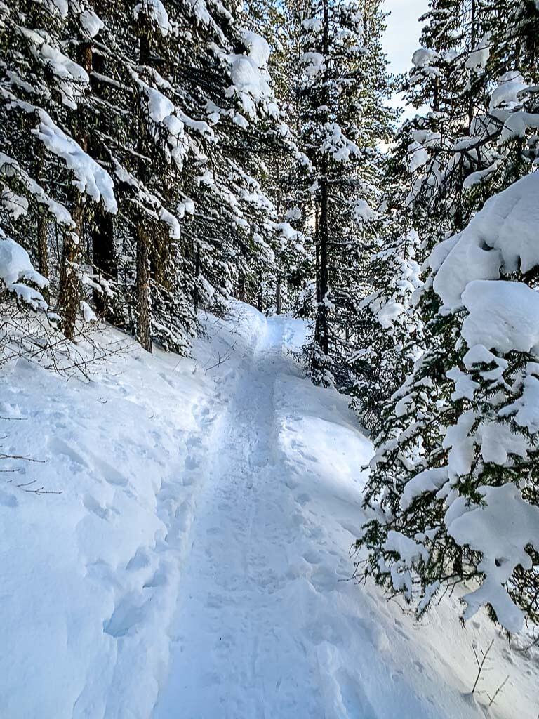 Lower Kananaskis Lake snowshoe trail in forest