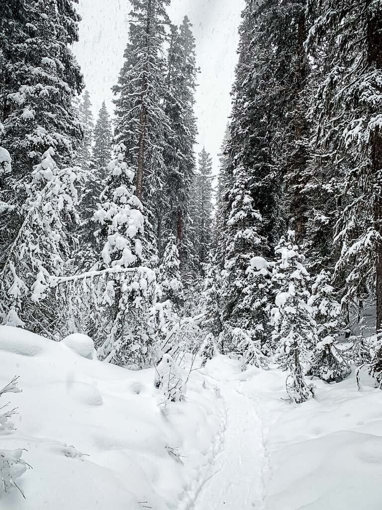Upper Stoney Loop Trail in Banff for snowshoeing or winter hike