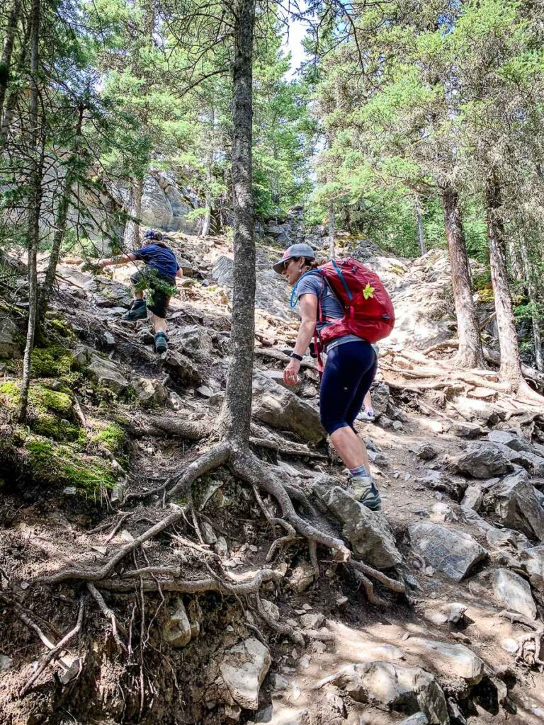 The section of hiking trail near the upper Yates Mountain lookout is steep with many rocks and roots