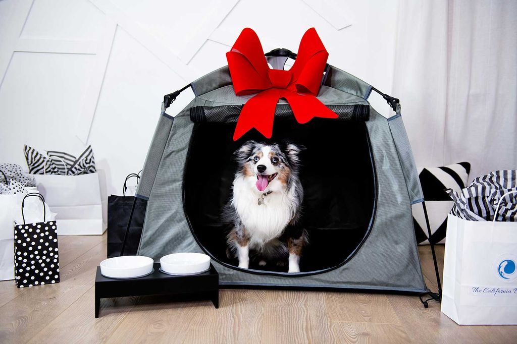 A portable playpen for your pet-friendly hotel in Banff