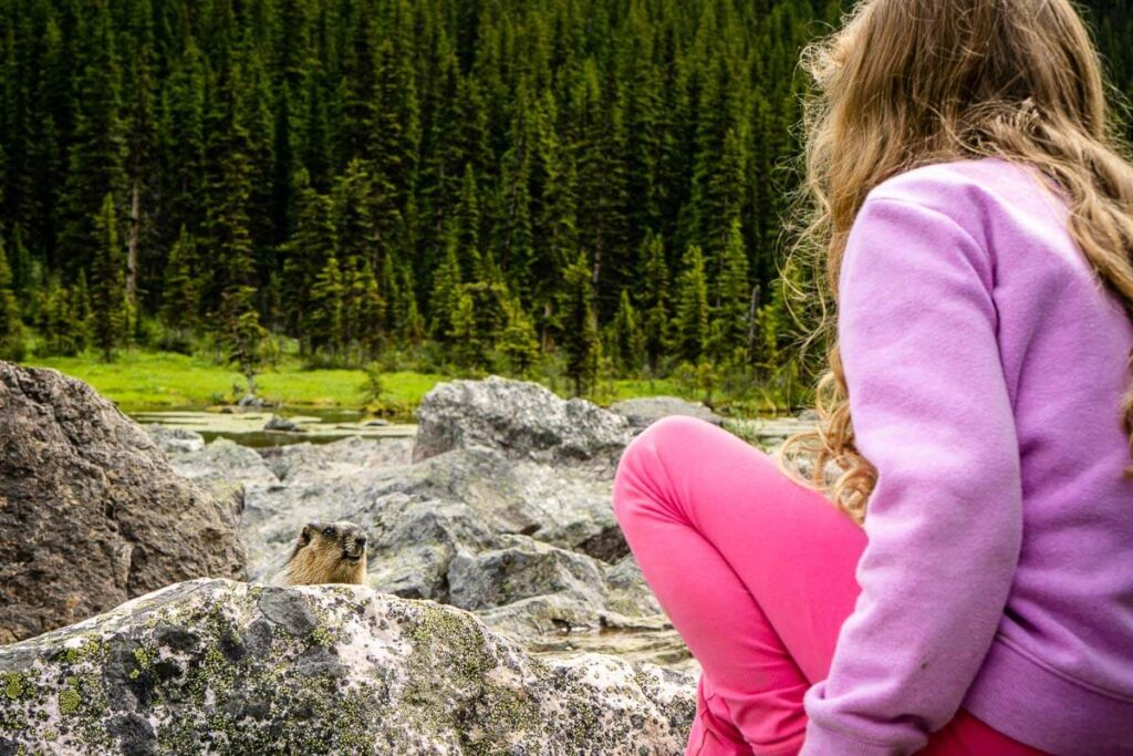 Seeing marmot at Consolation Lakes Hike - best Banff Day hikes with kids