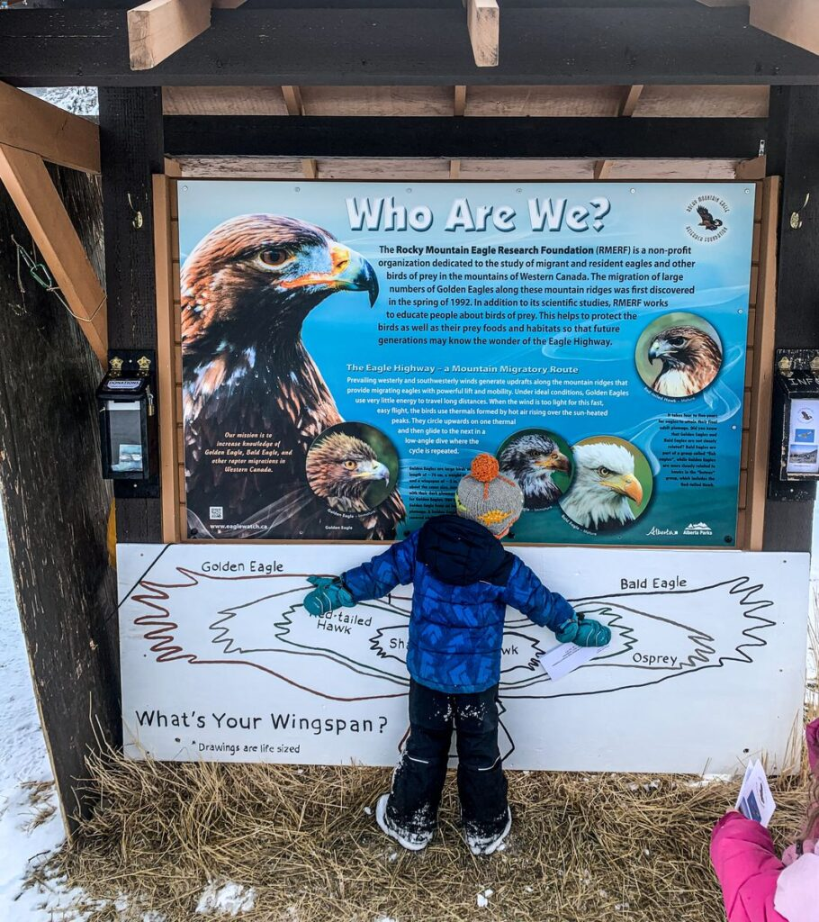 Compare your wingspan to a Golden Eagle at the Kananaskis Raptor Count site on the Troll Falls Hay Meadows Loop Trail