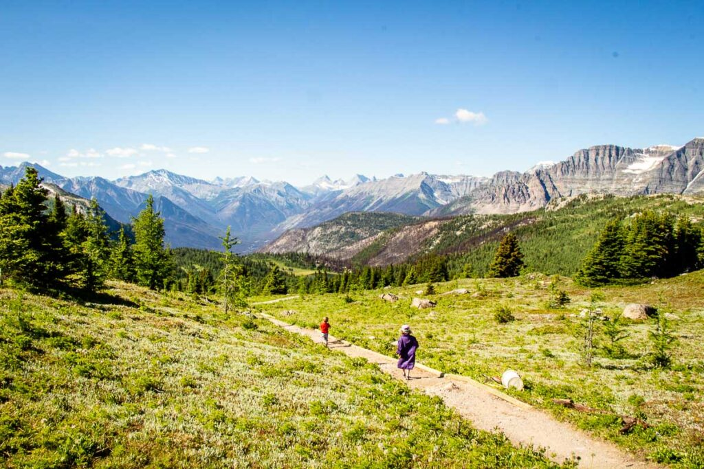 best banff hikes with kids - Sunshine Meadows