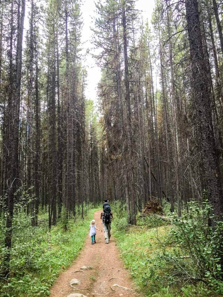 Hiking forested Moose Meadows to Ink Pots