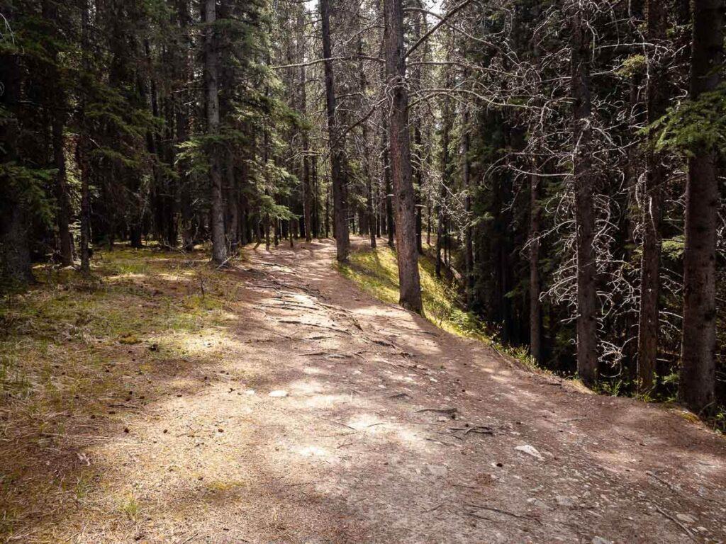 An enjoyable easy hike around Johnson Lake Alberta