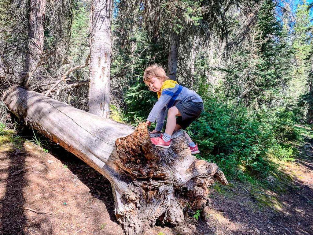 Climbing logs on Sundance Canyon hike in Banff