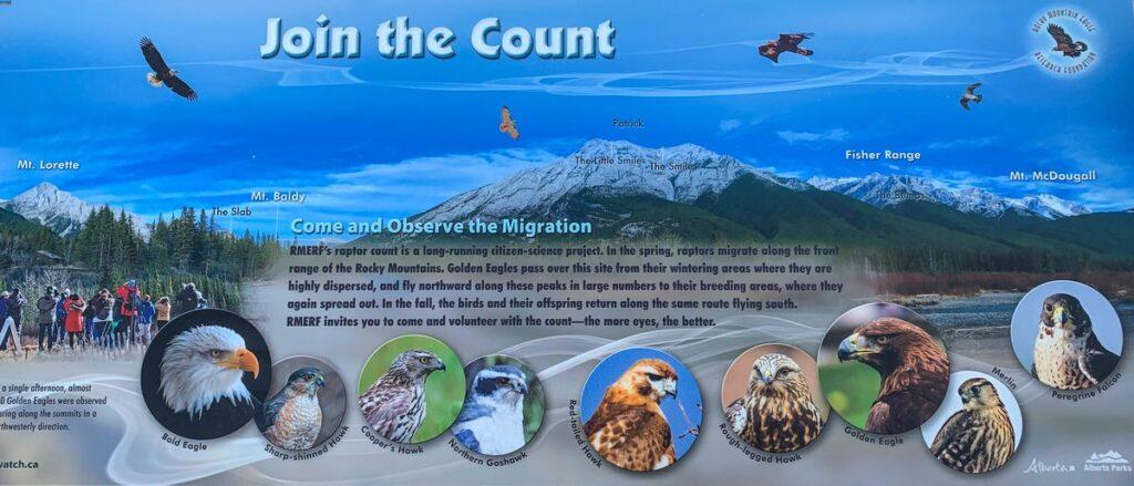 Annual RMERF raptor count in Kananaskis - Golden Eagle, Bald Eagle and more