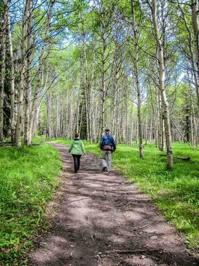 Hike through beautiful aspen trees in Kananaskis on the Troll Falls to Hay Meadows hike