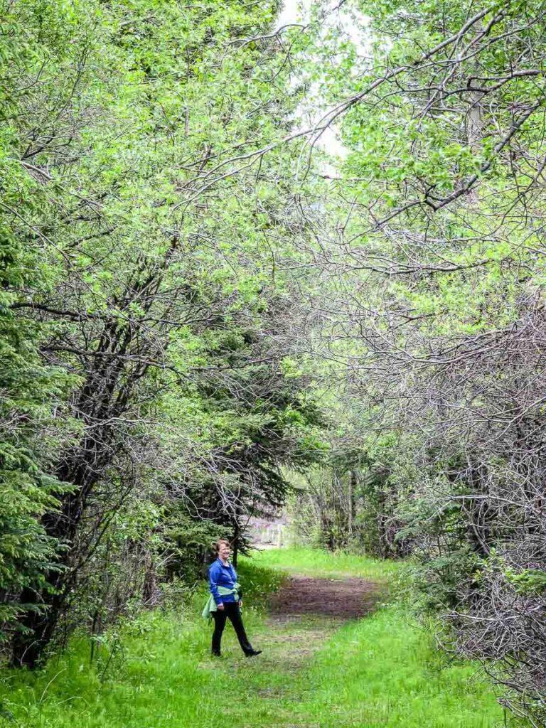 Taking the Hay Meadows Trail back to the Troll Falls parking lot near Kananaskis Village