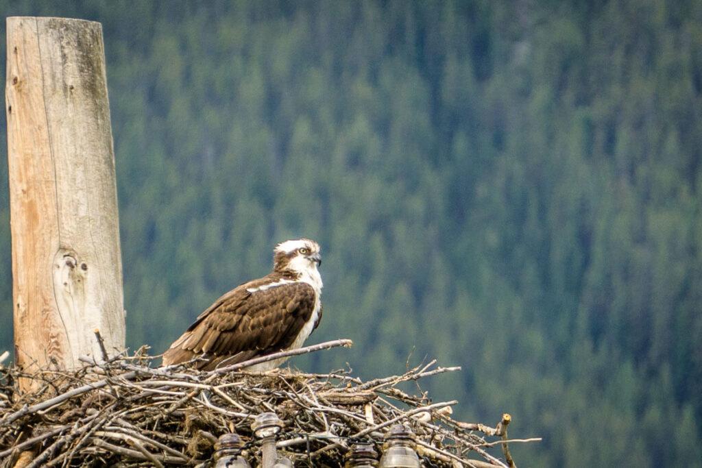 wildlife along Banff legacy Trail