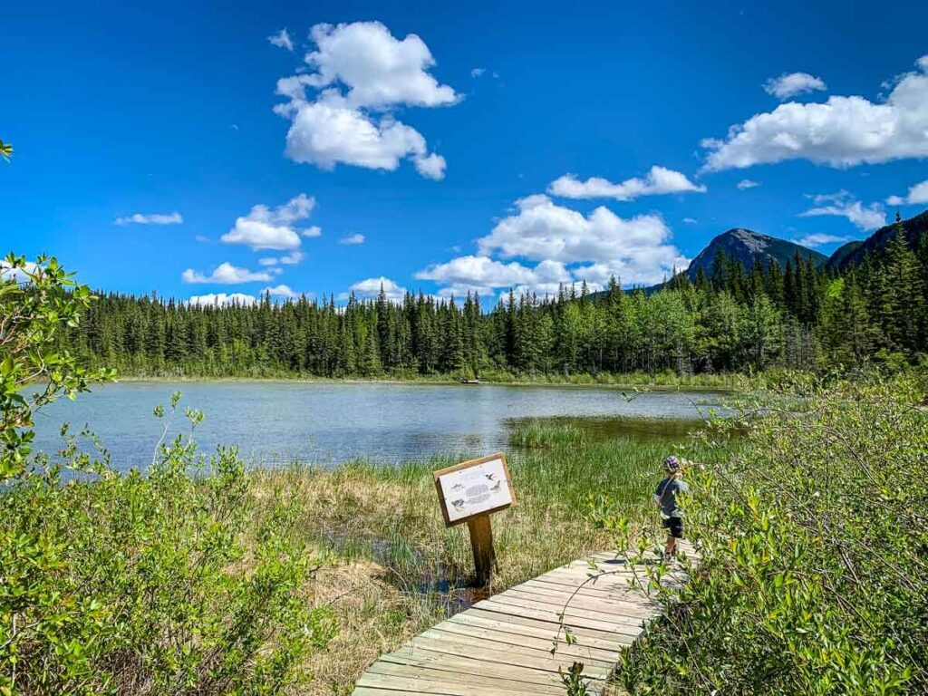 Many Springs is an easy hike Kananaskis