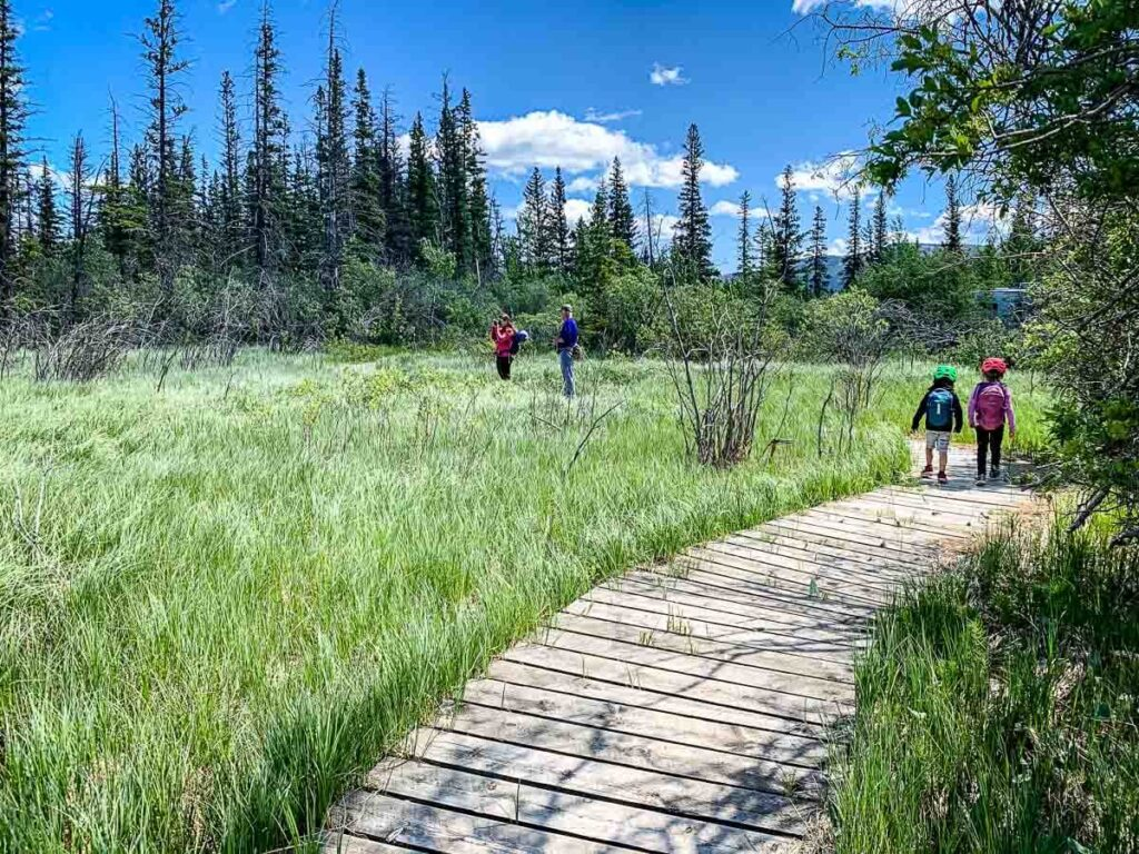 Wooden boardwalk on Flowing Water hiking trail Kananaskis