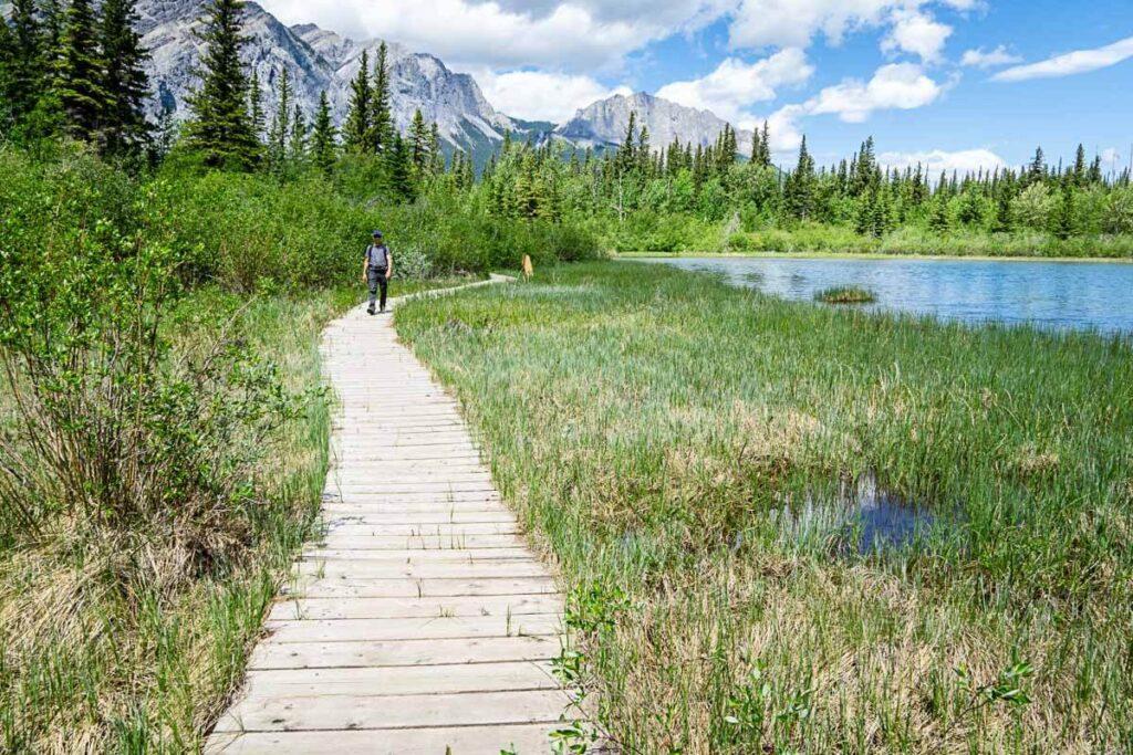 Wooden boardwalk over marsh area on Many Springs hiking trail kananaskis