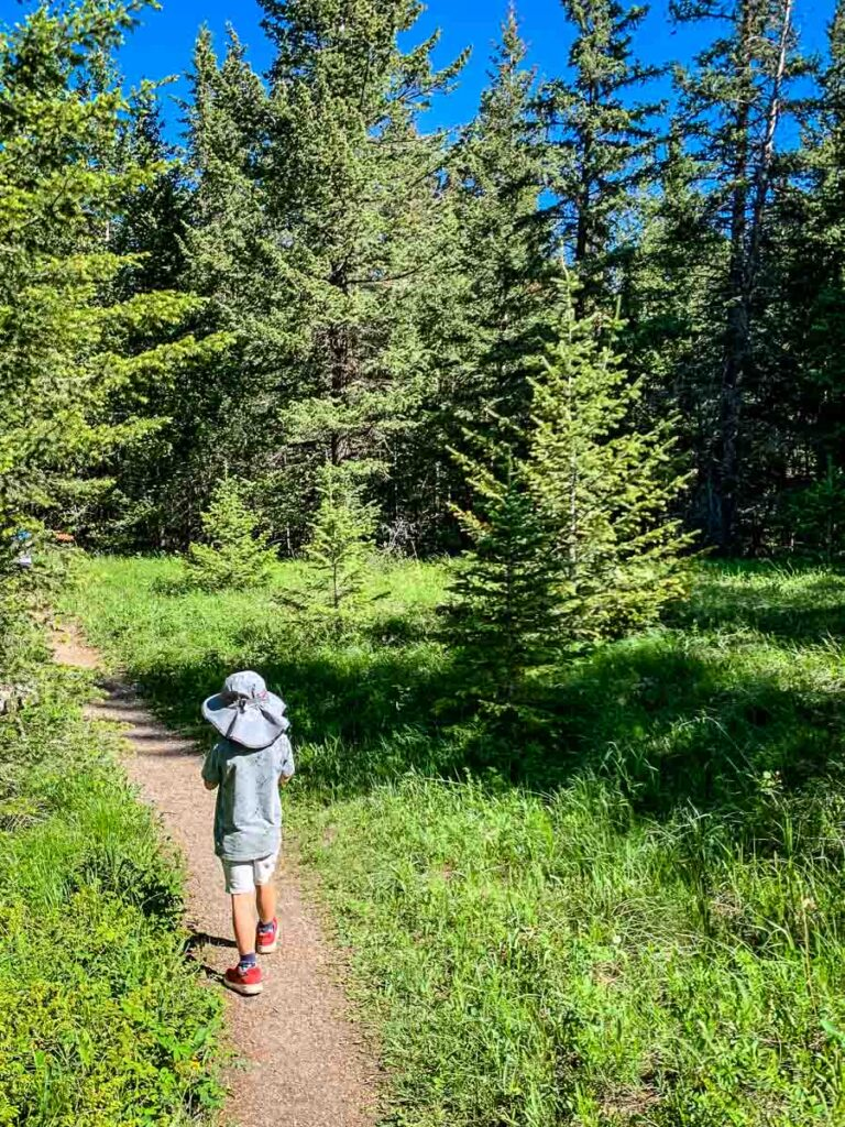 Bow River Interpretive Trail - Bow Valley Provincial Park hiking trails