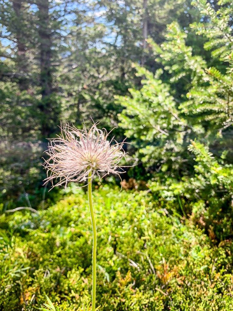 Bow Valley Provincial Park hiking trails - Montane Trail