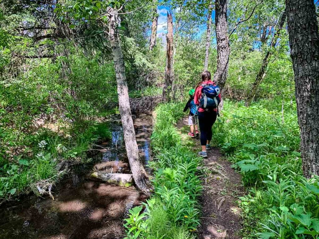 Flowing Water Interpretive Trail - easy hiking trail Kananaskis