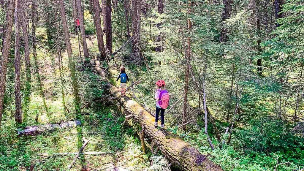 kids balancing on fallen tree along Montane trail a kid friendly hiking trail in Kananaskis