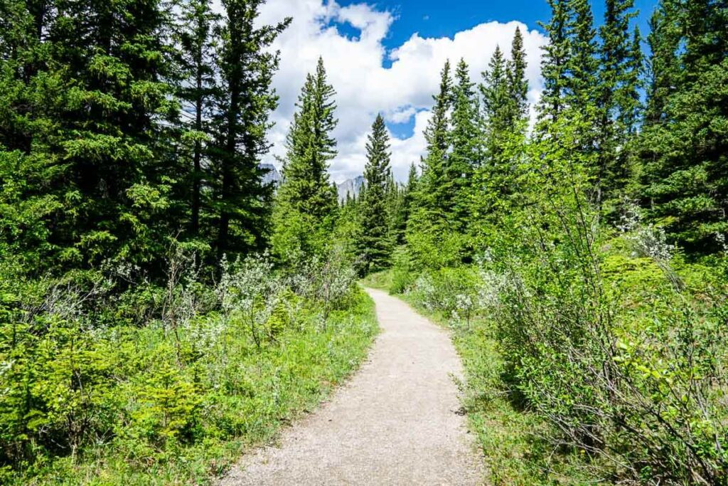 easy Kananaskis hike - Many Springs Interpretive Trail