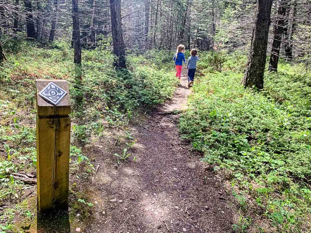 Interpretive signs along Middle Lake trail, Kananaskis