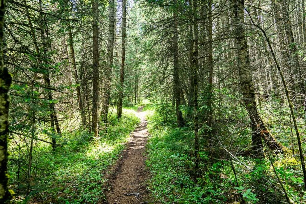 forested section of Middle Lake Interpretive Trail Kananaskis