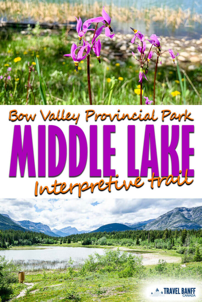 Middle Lake Interpretive Trail in the Bow Valley Provincial Park area of Kananaskis is an easy kid friendly hike. This easy Kananaskis hike features a walk in the forest, wildflowers and stunning mountain views.