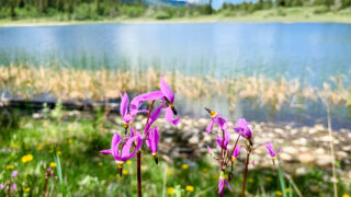 Middle Lake hiking trail in Bow Valley Provincial Park area of Kananaskis