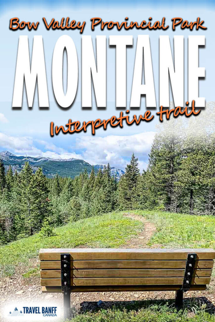 The Montane Interpretive Trail is a short Kananaskis hike that's perfect for kids. From a wildflower meadow to an interesting forest walk, everyone will love this easy and fun hiking trail in the Bow Valley Provincial Park area of Kananaskis.