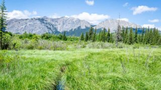 views of Yamnuska from Flowing Water hiking trail in Bow Valley Provincial Park