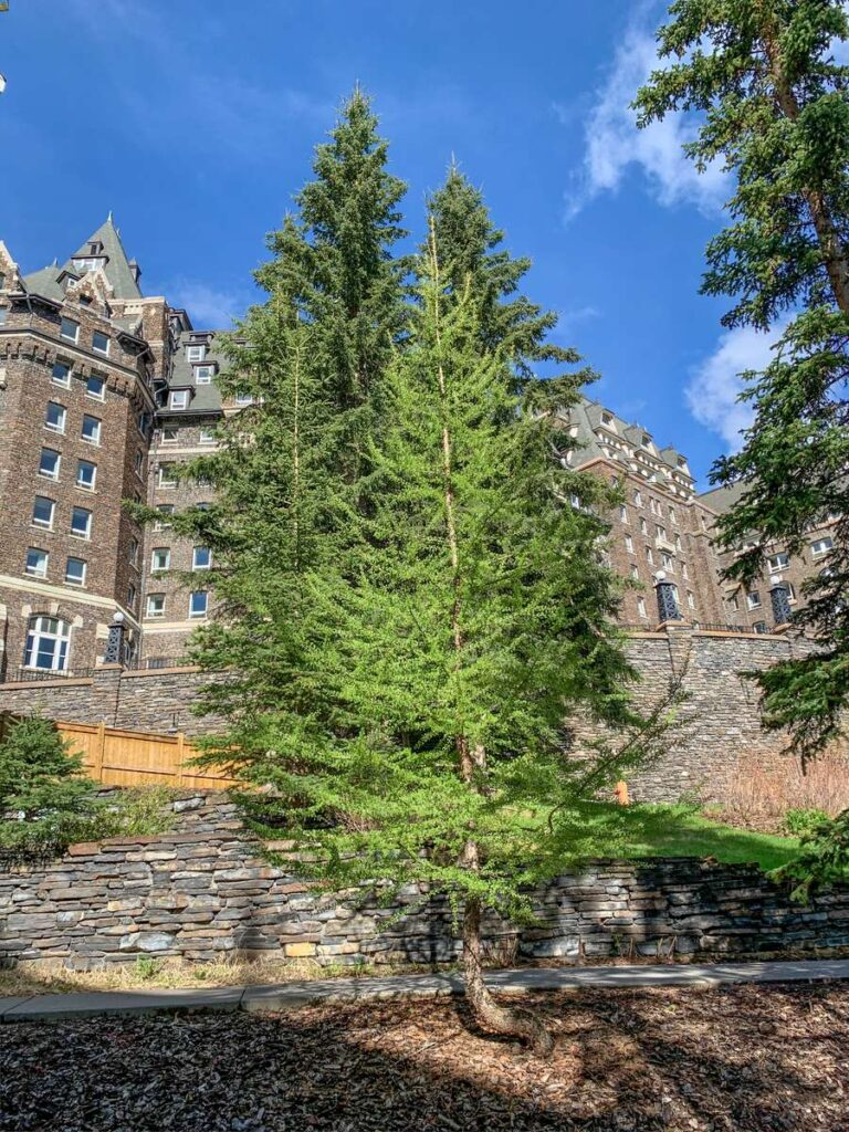 The main reason a Fairmont Room is the most affordable room at the Banff Springs Hotel is the lack of a mountain view