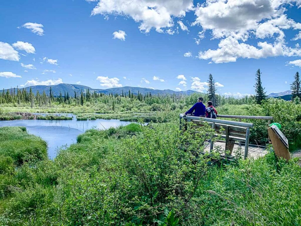 Beaver Dam on Flowing Water Interpretive Trail in Bow Valley Provincial Park