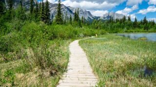 Boardwalk on Many Springs - easy hikes in bow valley provincial park