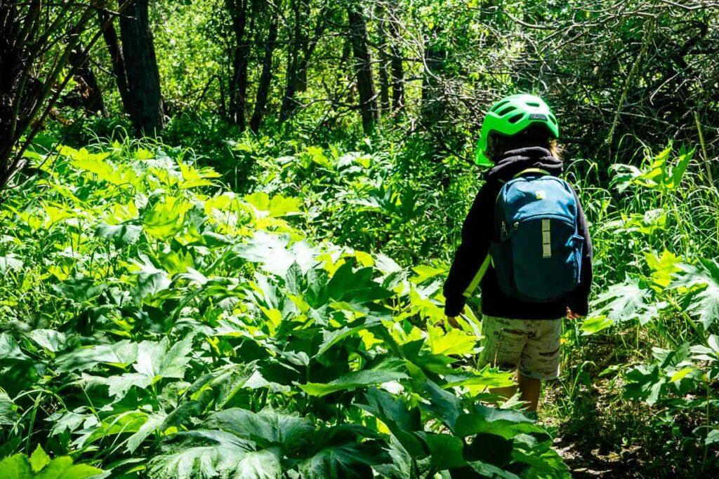 easy Kananaskis Hike - Flowing Water Trail