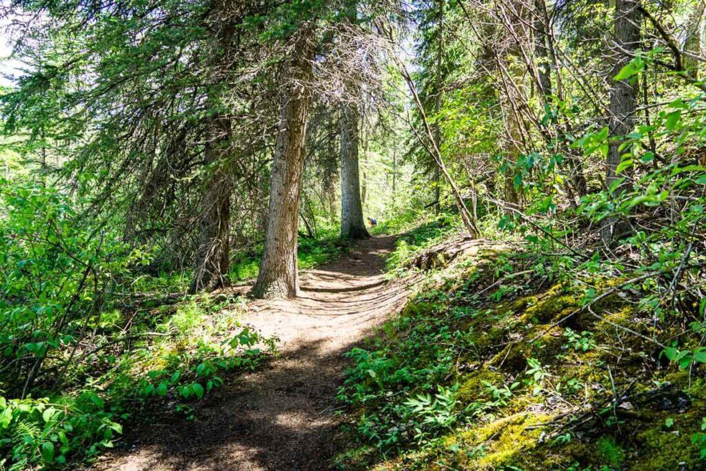 easy Kananaskis hike - Many Springs Interpretive Loop