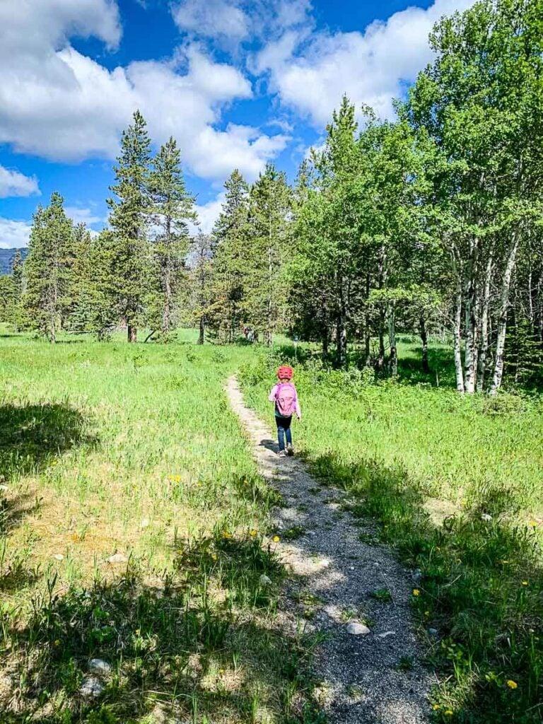 easy Kananaskis hike - Montane Interpretive Trail
